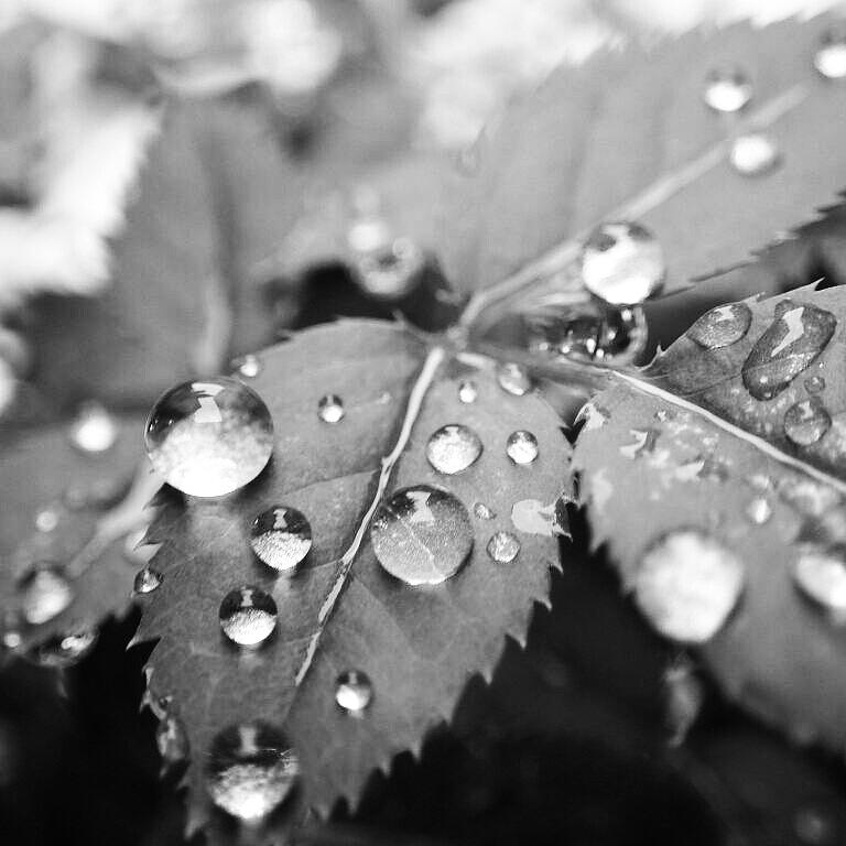 Raindrops Photograph by Kumiko Izumi