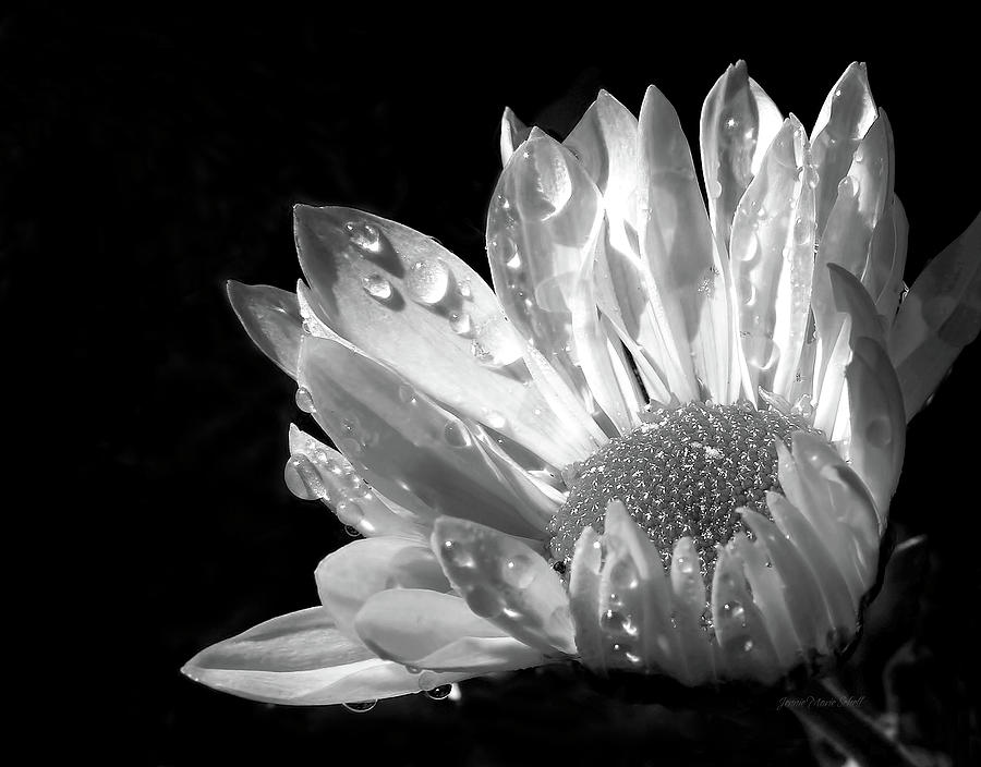 Daisy Photograph - Raindrops On Daisy Black And White by Jennie Marie Schell