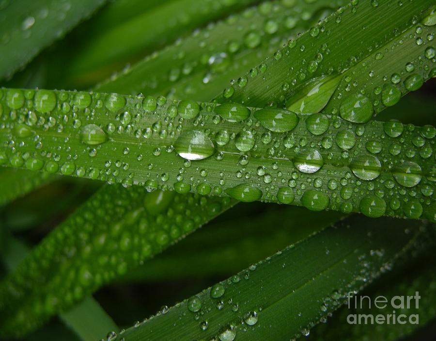 Rain Photograph - Raindrops On Green Leaves by Carol Groenen