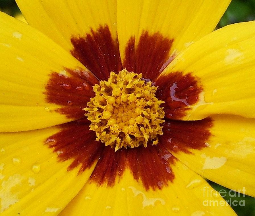 Yellow Photograph - Raindrops On Happiness by Deborah Brewer