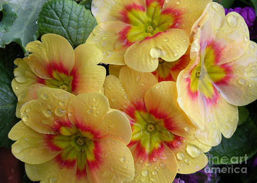 Yellow Flowers Photograph - Raindrops On Yellow Flowers by Carol Groenen