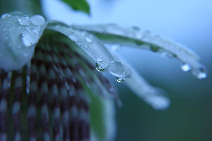 Rain Photograph - Rainflower by Linda Russell