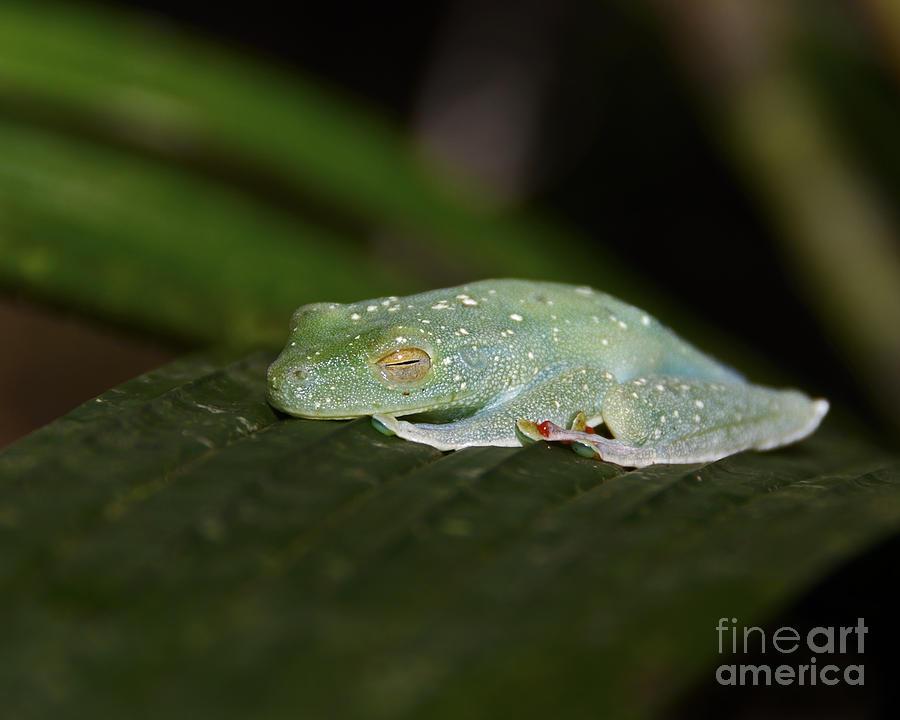 Nikon Photograph - Rainforest Detail.. by Nina Stavlund