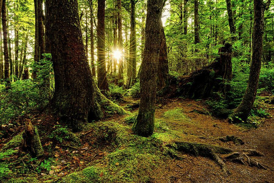 Rainforest Photograph - Rainforest Path by Chad Dutson