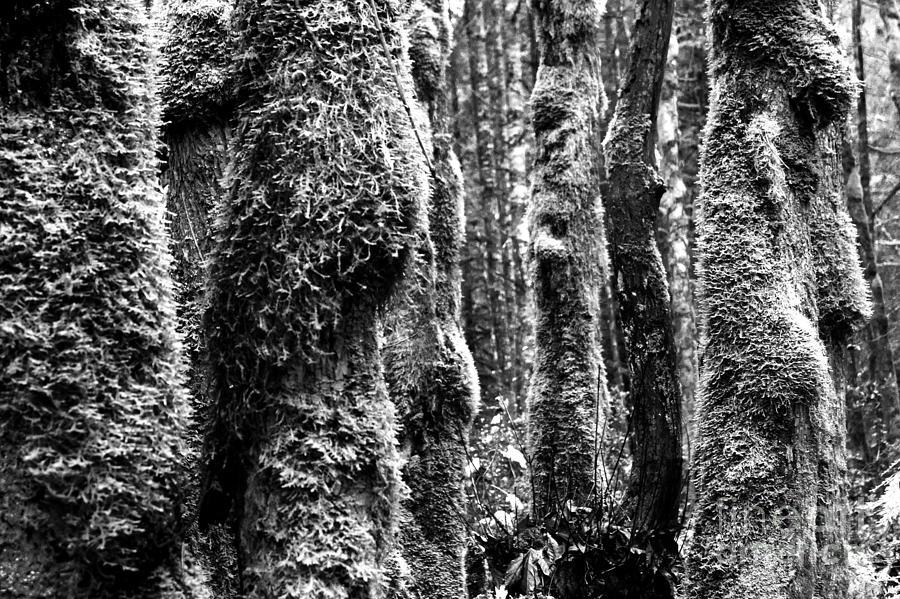 West Coast Photograph - Rainforest Ubiquitous Growth  by Peter Jamieson