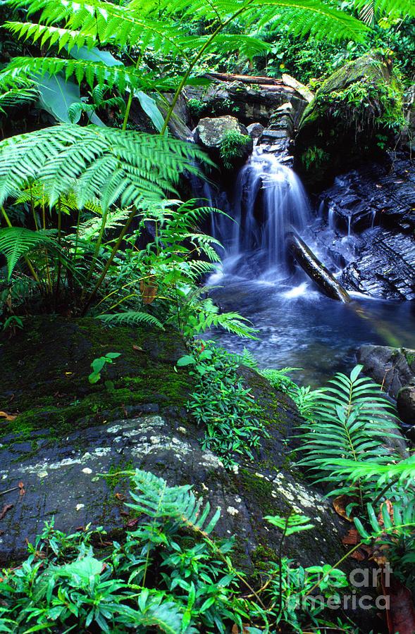 Puerto Rico Photograph - Rainforest Waterfall by Thomas R Fletcher