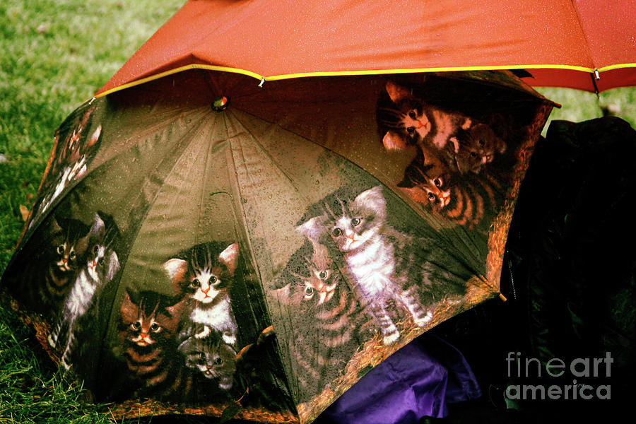 Cats Photograph - Raining Cats  by Steven Digman
