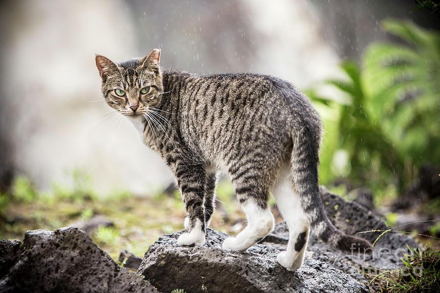 Rainy Cat 1 by Daniel Knighton