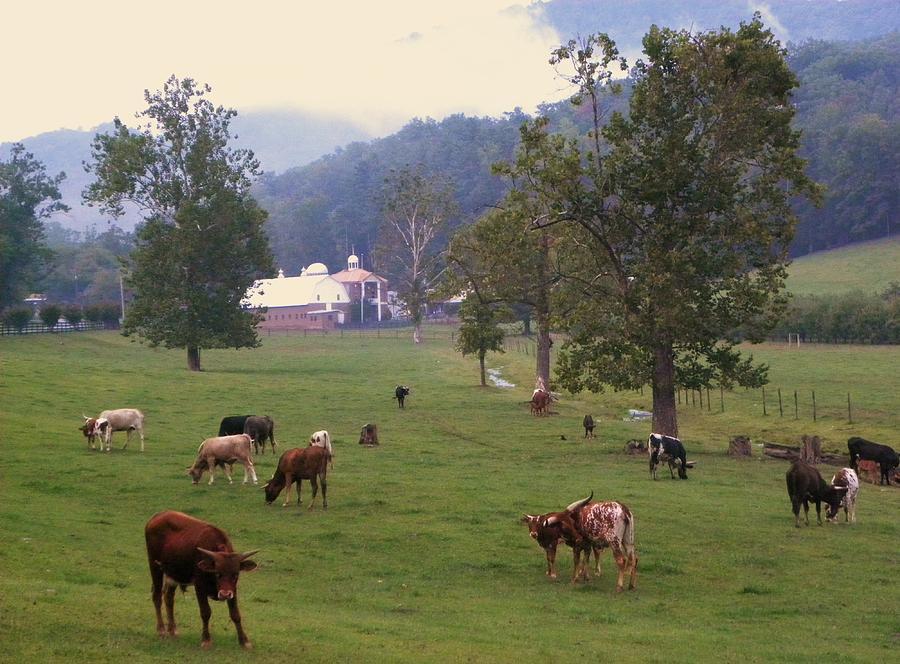 Cows Photograph - Rainy Day Longhorns by Cindy Gacha