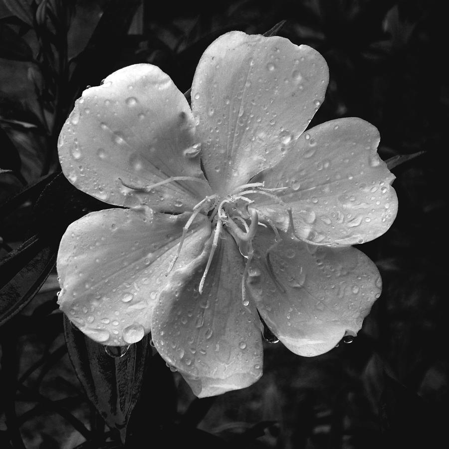 Flower Photograph - Rainy Days by Amarildo Correa