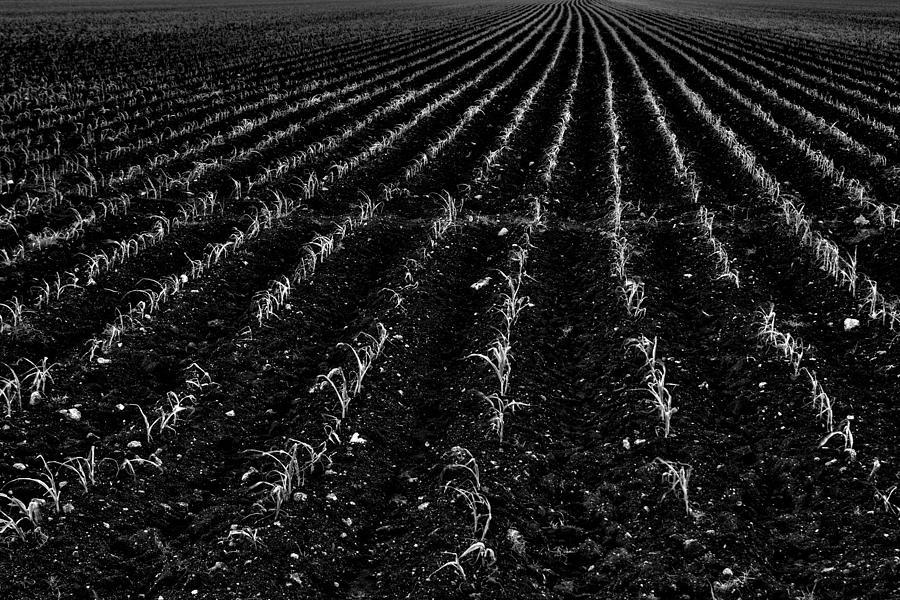 Sugarcane Photograph - Raising Cane by Roberto Aloi