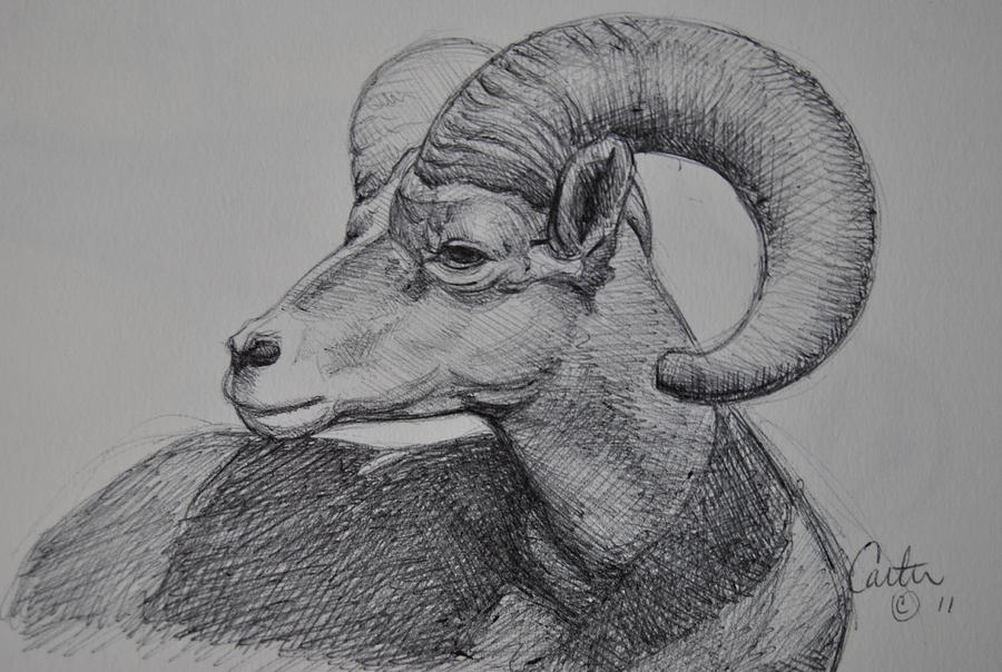 Ram Drawing - Ram Sketch. by Calvin Carter