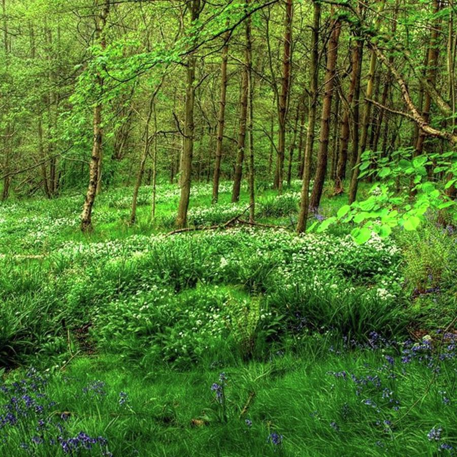 Nature Photograph - Ramsons And Bluebells, Bentley Woods by John Edwards