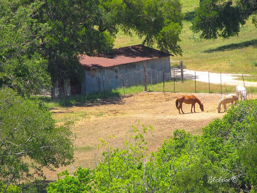 Ranch Photograph - Ranch Life by Christopher Saleh