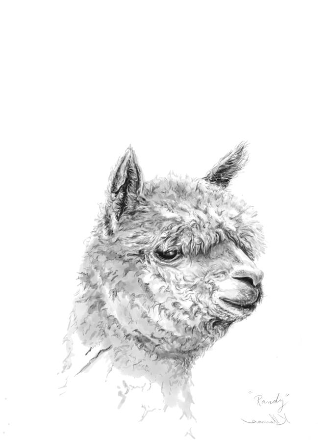 Llamas Drawing - Randy by K Llamas