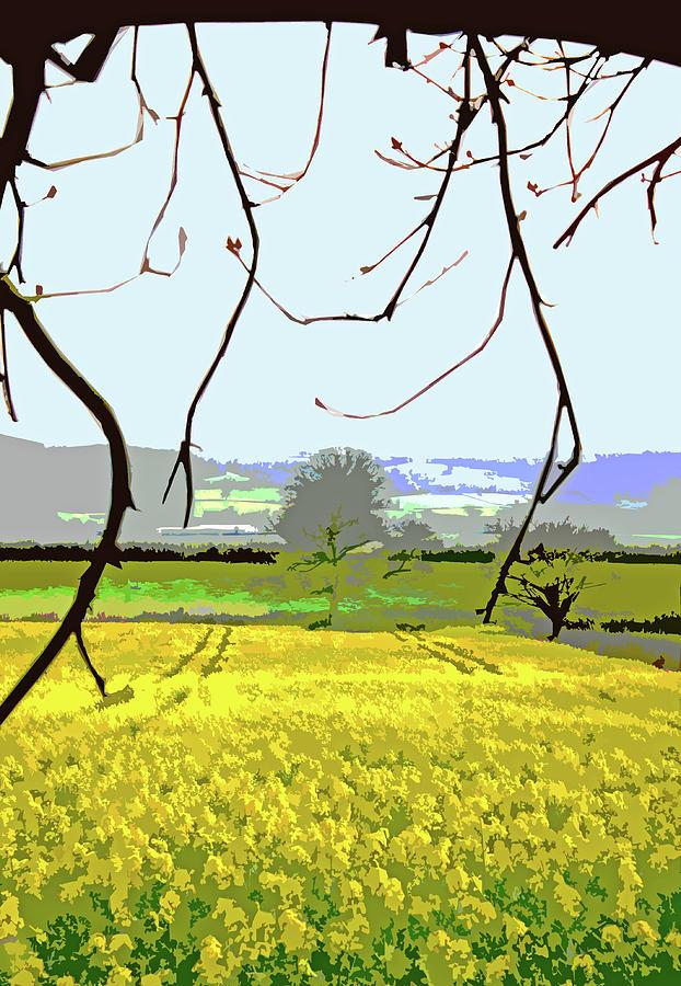 Rapeseed Field by Mary Castellan