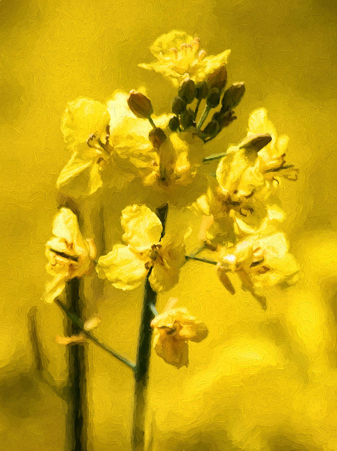 Color Photograph - Rapeseed by Trevor Wintle