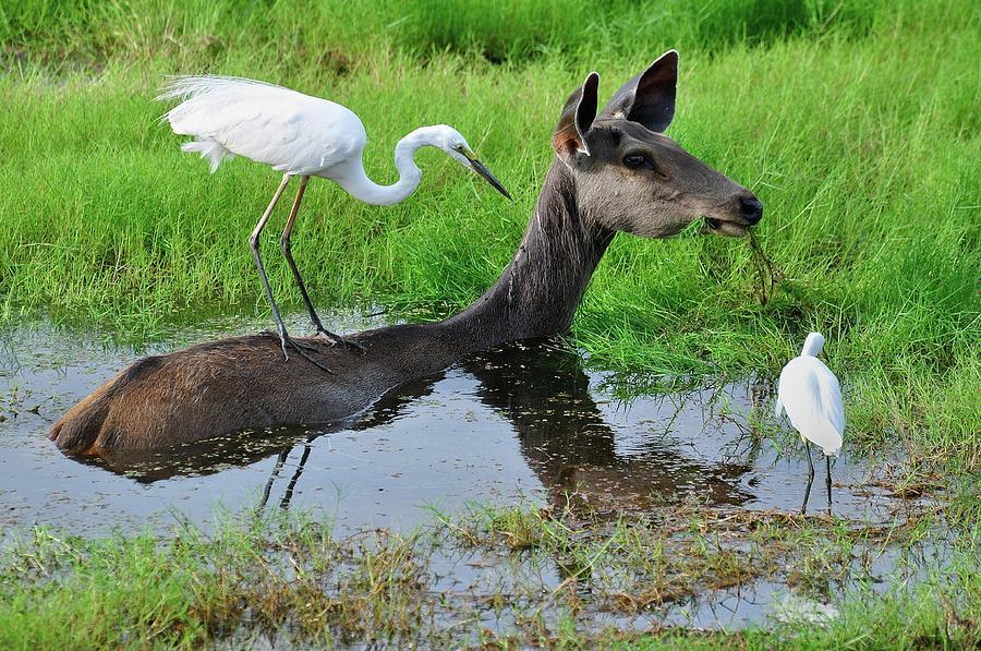 Deer Photograph - Rapport  by Manjot Singh Sachdeva