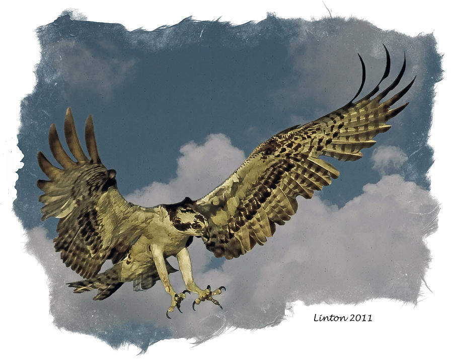 Osprey Digital Art - Raptor by Larry Linton