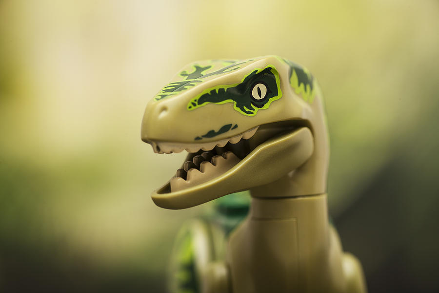 Raptor On The Prowl Photograph