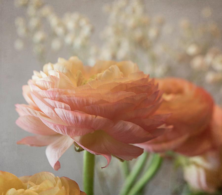 Ranunculus Photograph - Ranunculus - 6315 by Teresa Wilson