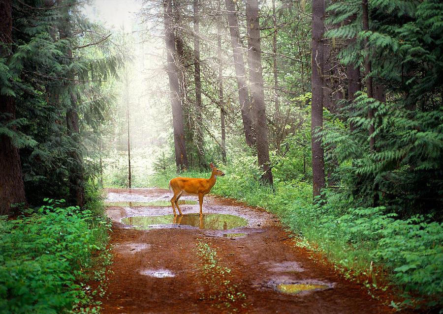 Wildlife Photograph - Rare Moment by Leland D Howard