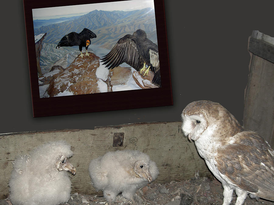 Digital Collage Digital Art - Condors And Owl Nest by Lea Cox