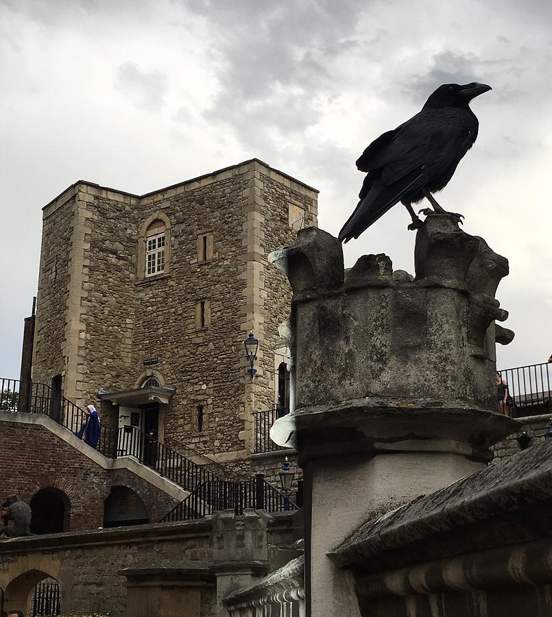 Raven at Tower of London  by Daniele Smith