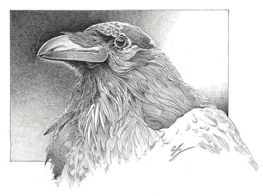 Raven Drawing - Raven by Durwood Coffey