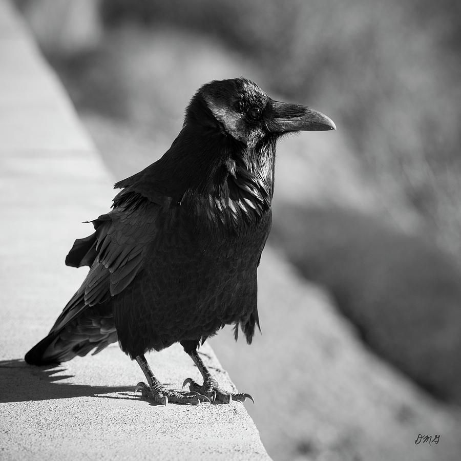 Raven IV BW by David Gordon
