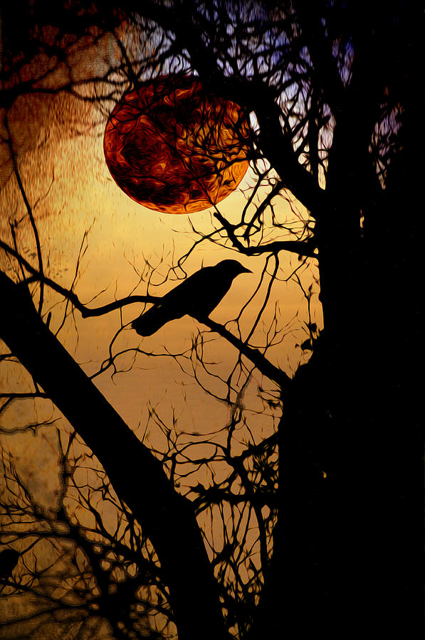 Raven Photograph - Raven Moon by Bill Cannon