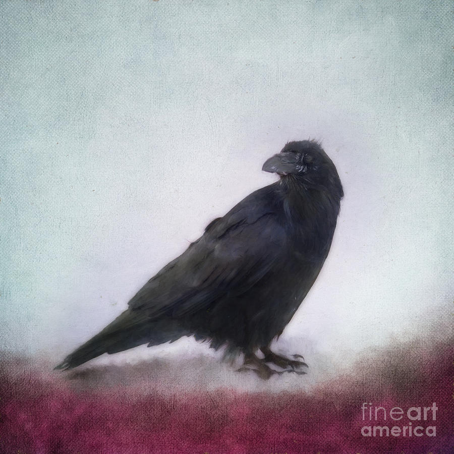 Raven Photograph - Raven by Priska Wettstein