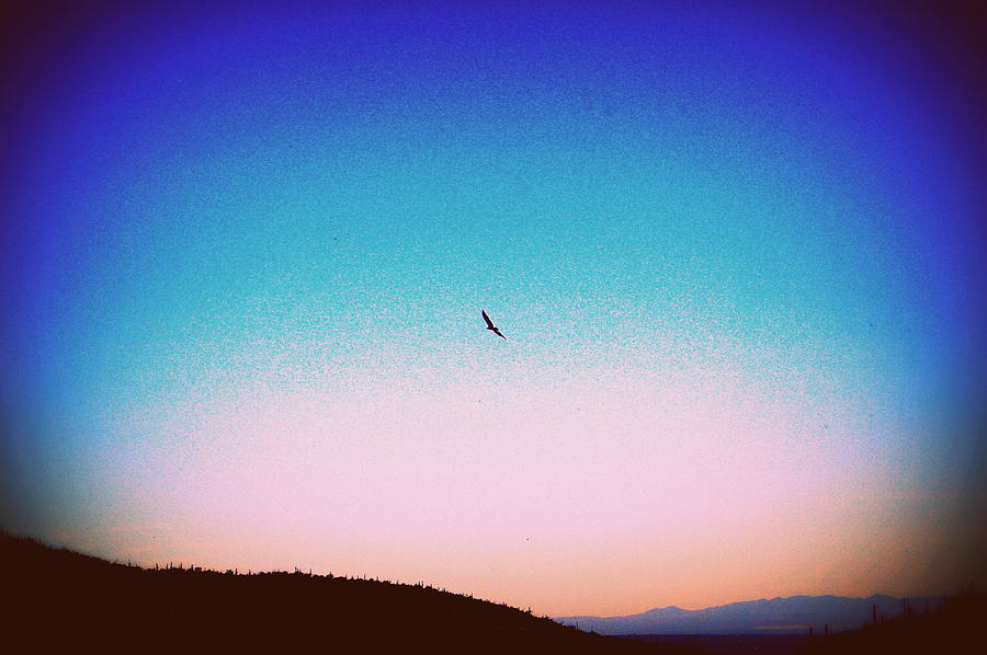 Raven Soaring Above Tucson -edited 2 Photograph
