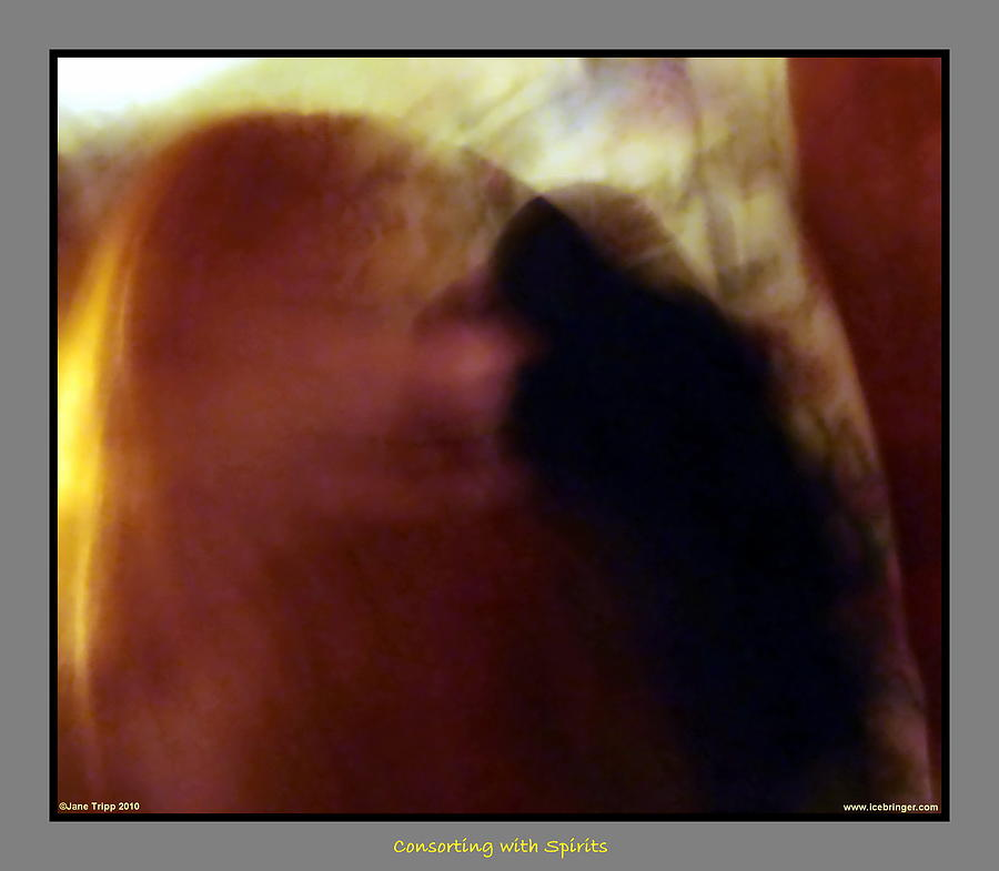 Ghost Photograph - Raven Visits by Jane Tripp