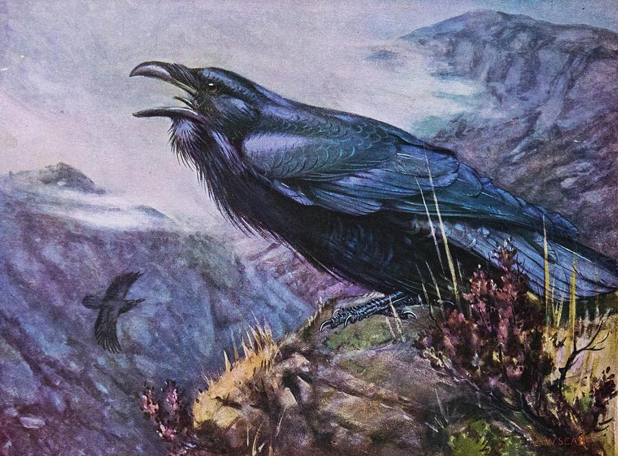 Ravens Bird Art