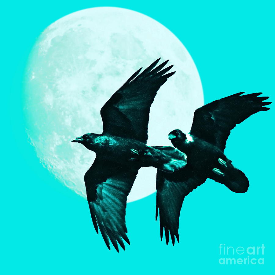 Cyan Photograph - Ravens Of The Moon . Cyan Square by Wingsdomain Art and Photography