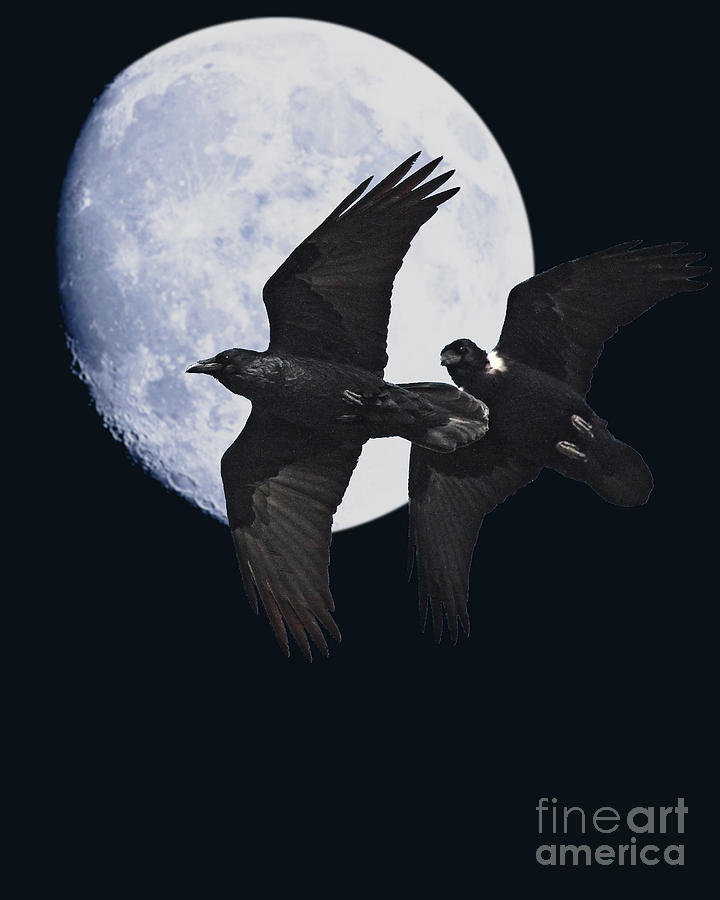 Black And White Photograph - Ravens Of The Night by Wingsdomain Art and Photography
