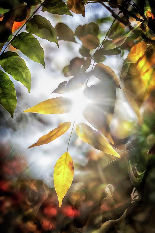 Hunter Valley Photograph - Ray Of Hope by Az Jackson