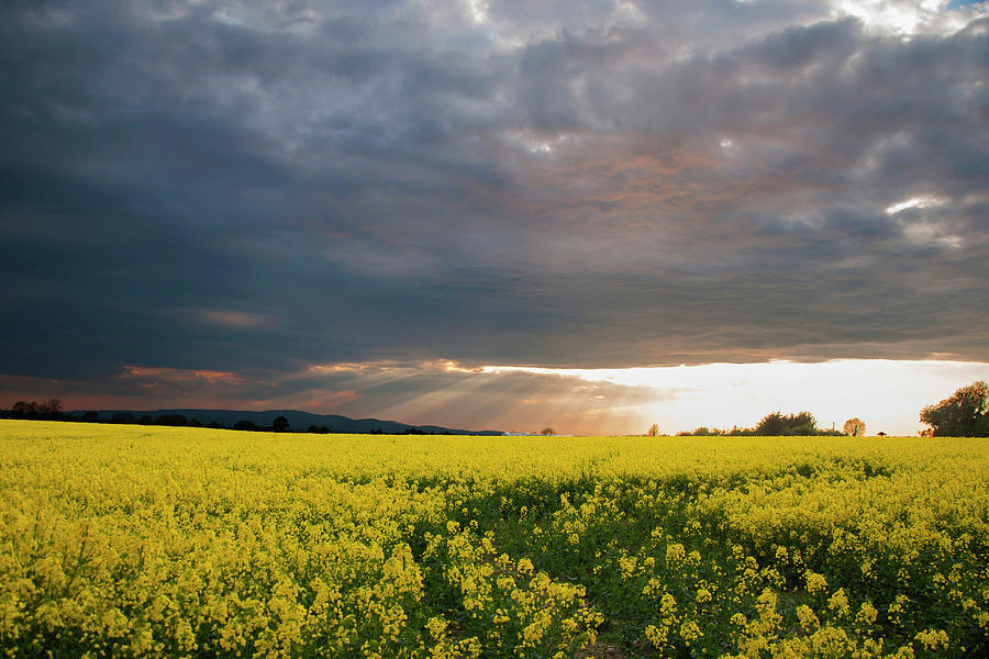 Rays at Sunset by Rob Hemphill
