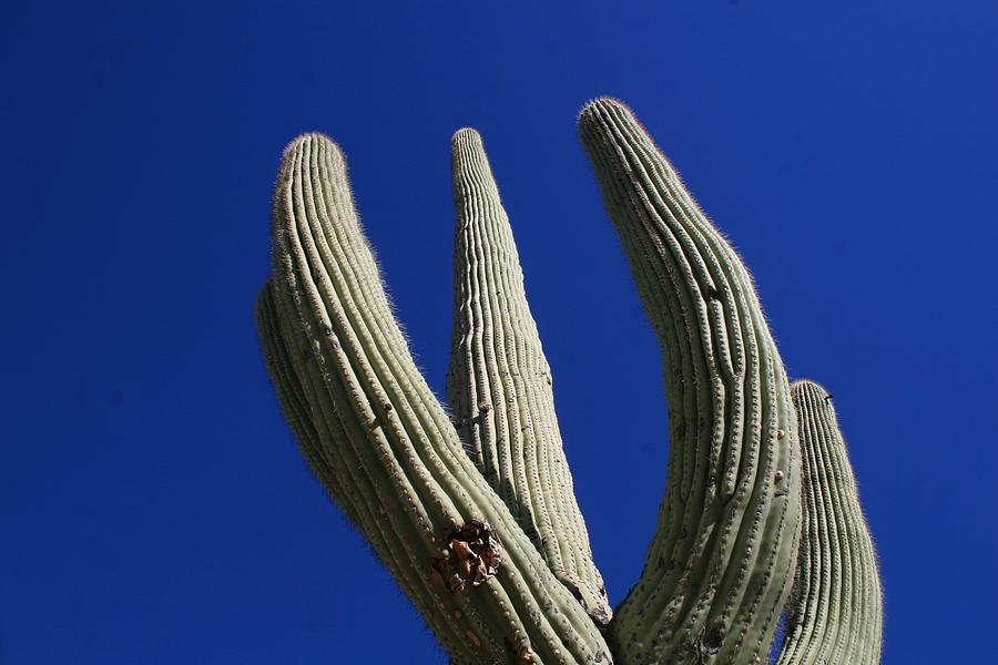Saguaro Photograph - Reach For The Sky by Bob Gardner