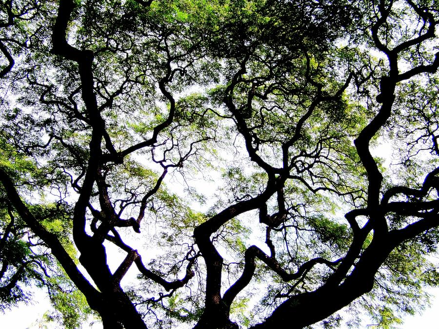Trees Photograph - Reach For The Sky by Karen Wiles