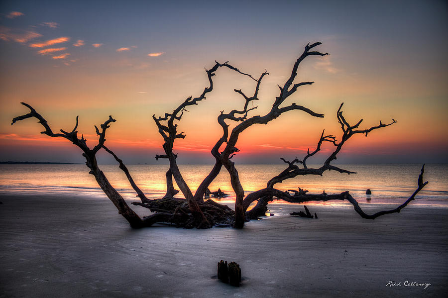 Reaching Driftwood Beach Sunrise Jekyll Island Georgia Art by Reid Callaway