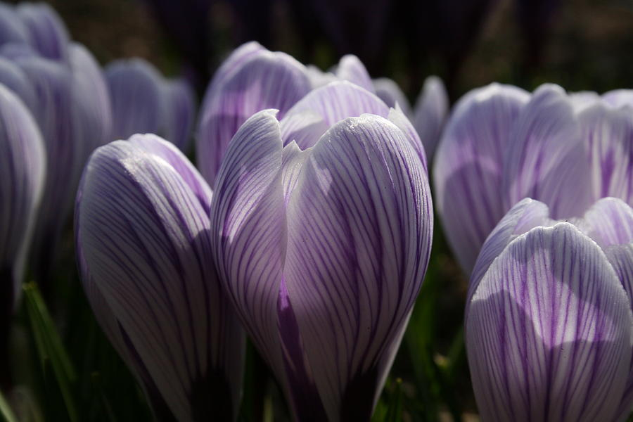 Flowers Photograph - Reaching For The Light by Jeff Porter