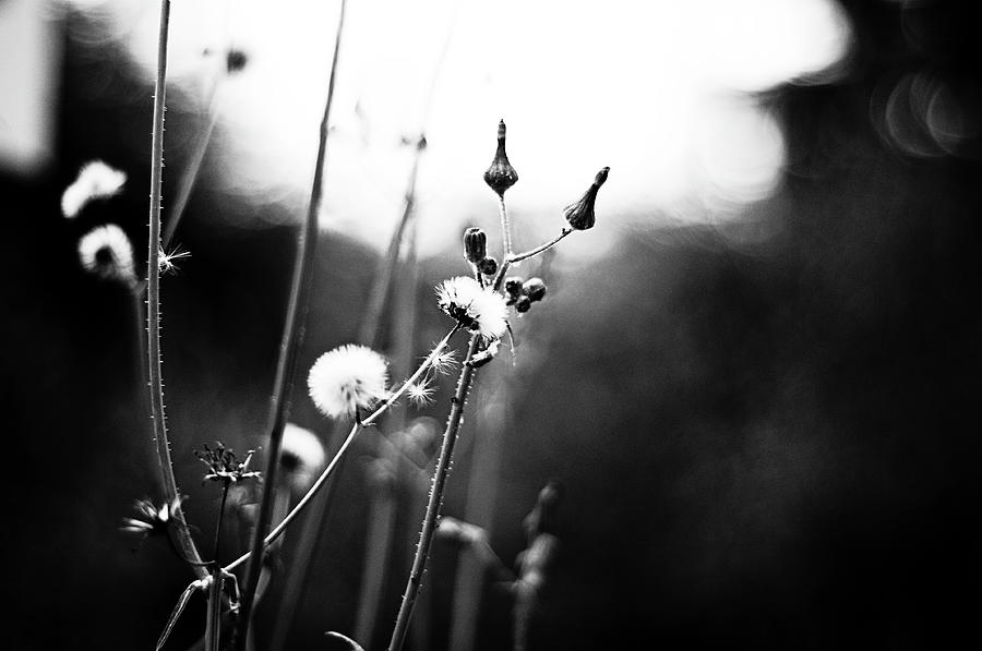 Black And White Photography Photograph - Reaching For The Light by  Kelly Hayner