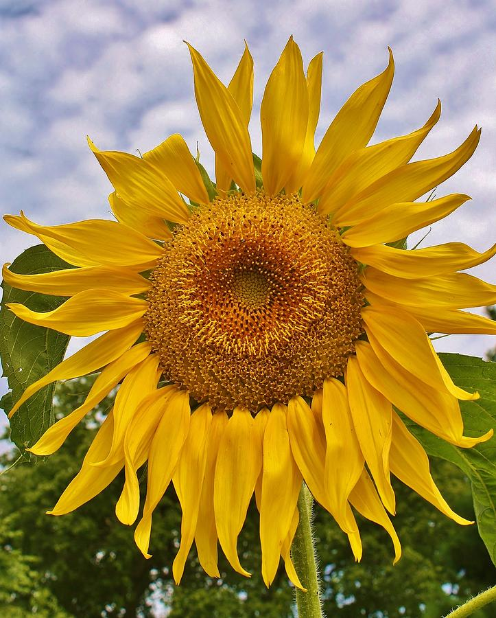 Flora Photograph - Reaching For The Sky by Bruce Bley