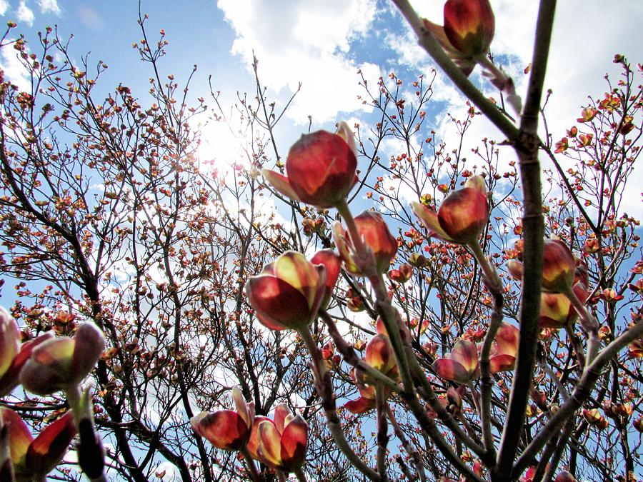 Blooms Photograph - Reaching For The Sky by Stephanie Schneider