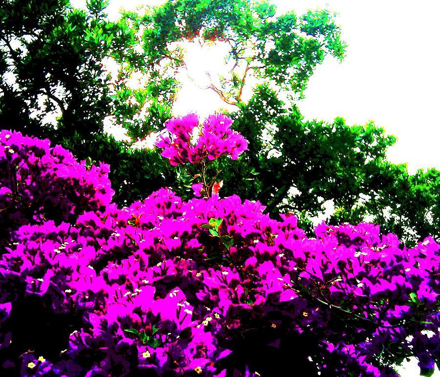Pink Flower Photograph - Reaching For The Sun by Douglas Kriezel