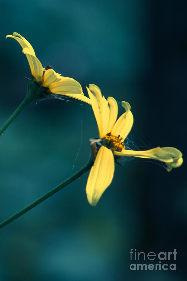 Wildflowers Photograph - Reaching Out  by Kristin Hunt