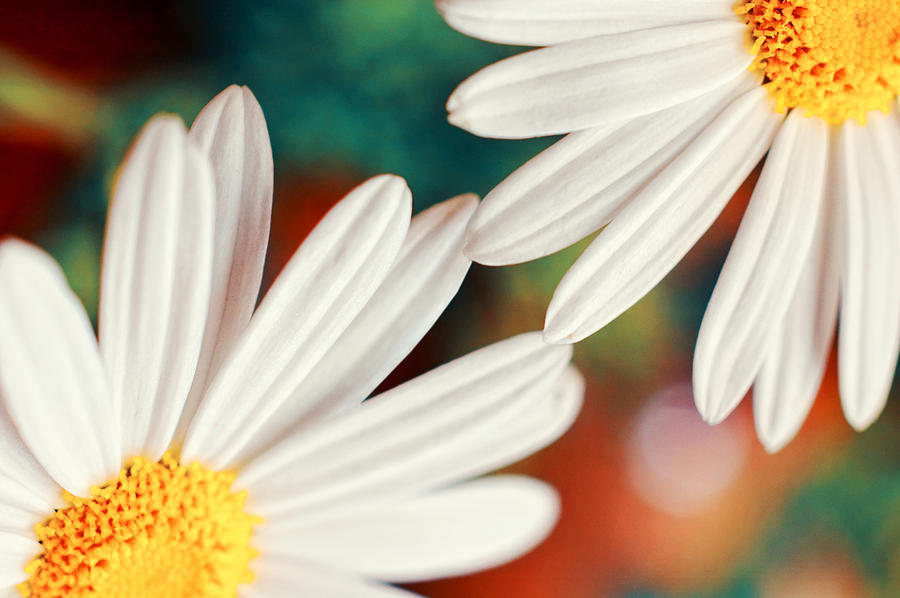 Close Up Photograph - Reaching Out by Silvia Ganora