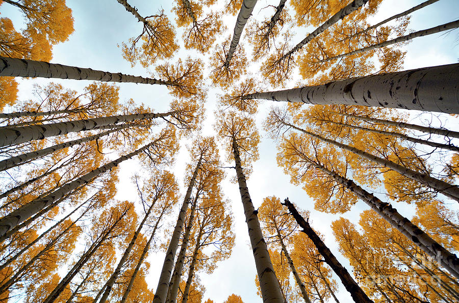Trees Photograph - Reaching The Sky by Frank Stallone